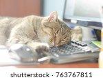 Stock photo european cat carefree asleep on a black keyboard 763767811
