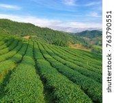 tea plantation at doi mae... | Shutterstock . vector #763790551