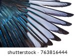 Close Up Of Iridescent Feather...