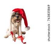 Jack Russell   Christmas Dog  ...