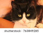 Stock photo beautiful kittens image 763849285