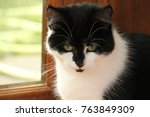 Stock photo beautiful kittens image 763849309
