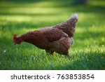 free range chickens in field | Shutterstock . vector #763853854