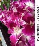 thai orchids in fresh flowers... | Shutterstock . vector #763883959
