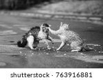 street cats are fighting on the ... | Shutterstock . vector #763916881