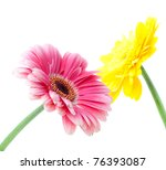 Two gerbera flowers. Small DOF. Isolated on white - stock photo