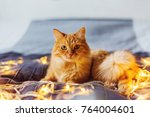 Stock photo cute ginger cat lying in bed with shining light bulbs fluffy pet looks curiously cozy home 764004601