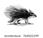 porcupine ink illustration. | Shutterstock . vector #764022199