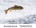 Atlantic Salmon  Salmo Salar ...