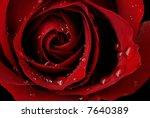 Macro Image Of Dark Red Rose...
