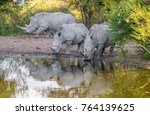 white rhinos taking a mud bath  ... | Shutterstock . vector #764139625