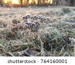 frozen plant herb. frost frost... | Shutterstock . vector #764160001