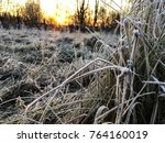 frozen plant herb. frost frost... | Shutterstock . vector #764160019