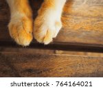 Stock photo cat paw on wooden closeup cat paw on wooden background cat foot paw of cat vintage 764164021