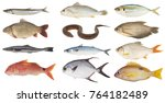 big fresh fish collection... | Shutterstock . vector #764182489