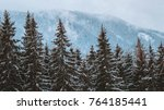 color moody image of forest... | Shutterstock . vector #764185441