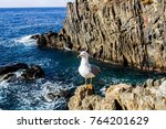 Sea Gull Close Up On Beach...