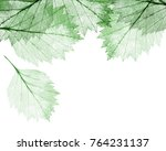 green leaves skeletons isolated ... | Shutterstock . vector #764231137