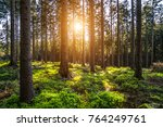 silent forest in spring with... | Shutterstock . vector #764249761