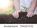 child hand planting young tree... | Shutterstock . vector #764267131
