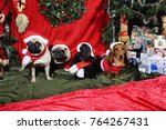 dogs  pets wishing a merry...   Shutterstock . vector #764267431