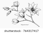 magnolia flower drawing and... | Shutterstock .eps vector #764317417