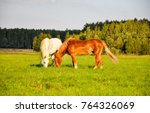 Stock photo two horses grazing on pasture field 764326069
