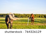 Stock photo two horses on pasture 764326129