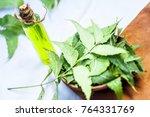 azadirachta indica neem with... | Shutterstock . vector #764331769