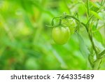 green tomatoes with nature... | Shutterstock . vector #764335489