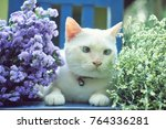 cute cat sit with beautiful... | Shutterstock . vector #764336281