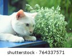 cute cat sit on the chair with... | Shutterstock . vector #764337571