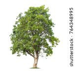 tree isolated on white... | Shutterstock . vector #764348995