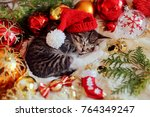 Stock photo christmas cat with red christmas decoration sweet kitten sleeping in red hat 764349247