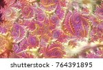 an abstract computer generated... | Shutterstock . vector #764391895