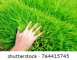 hand on the small little sprout ... | Shutterstock . vector #764415745