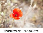 landscape of a red poppy on a... | Shutterstock . vector #764503795