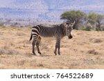 cape mountain zebra from... | Shutterstock . vector #764522689