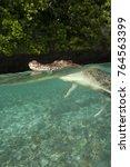 saltwater crocodile  crocodylus ... | Shutterstock . vector #764563399