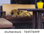 a homeless dog is sleeping on a ... | Shutterstock . vector #764576449