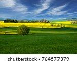 rapeseed field landscape. field   Shutterstock . vector #764577379