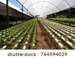 hydroponic cultivation of... | Shutterstock . vector #764594029