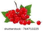 Red Berries Of Viburnum  Arrow...