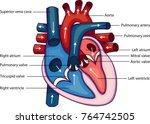 schematic vector illustration... | Shutterstock .eps vector #764742505