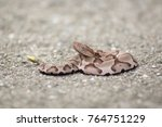 Baby Rattlesnake On Pavement