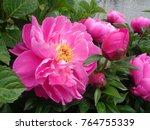 beautiful vibrant colorful... | Shutterstock . vector #764755339