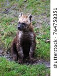 spotted hyena cub sitting | Shutterstock . vector #764758351