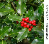 holly foliage with matures red... | Shutterstock . vector #764760271