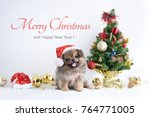 Stock photo happy new year christmas dog in santa claus hat celebration balls and other decoration 764771005