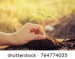 close up of hand planting... | Shutterstock . vector #764774035